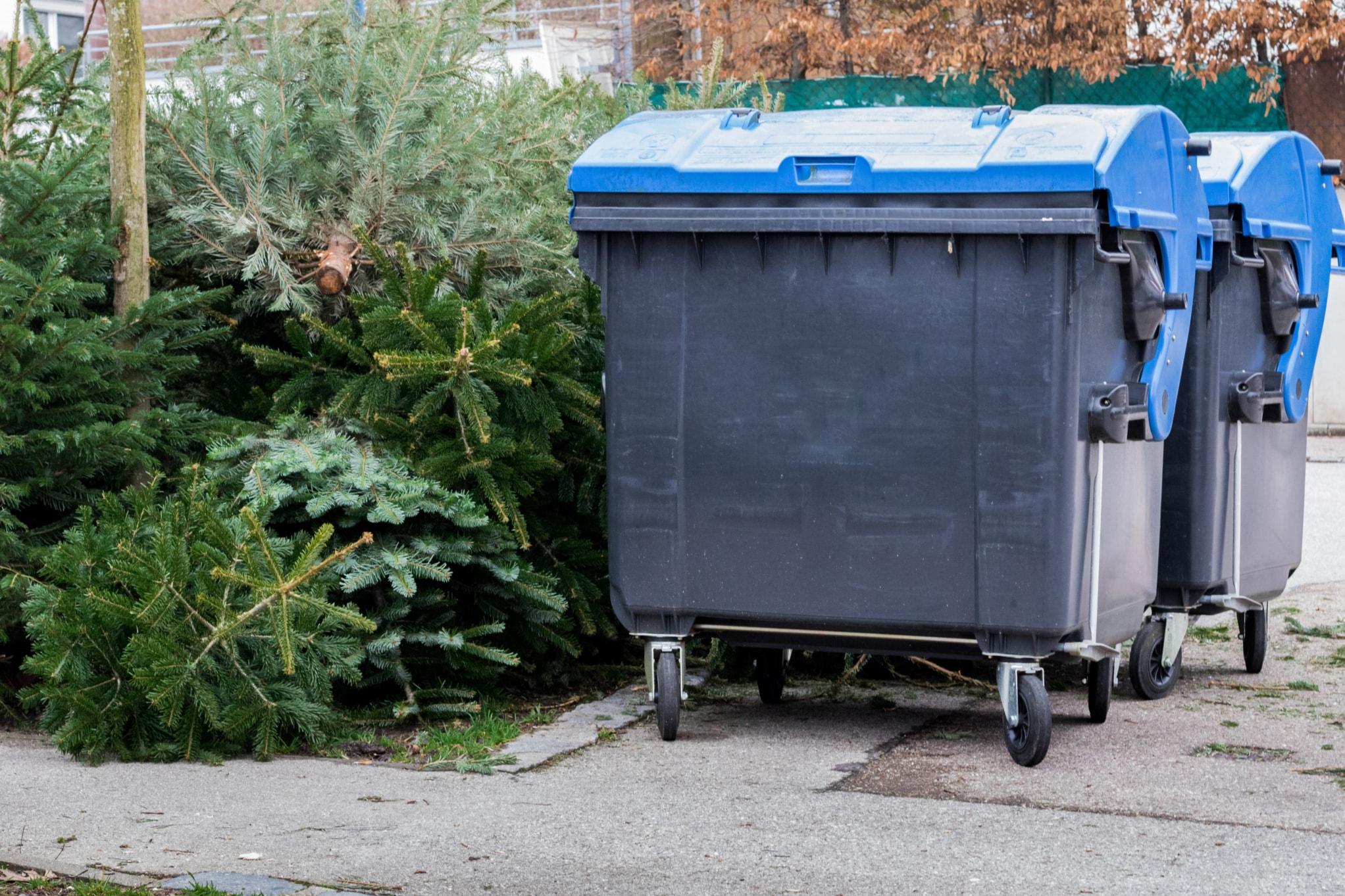 Christmas, Christmas Trees, Recycle, Recycling Bin