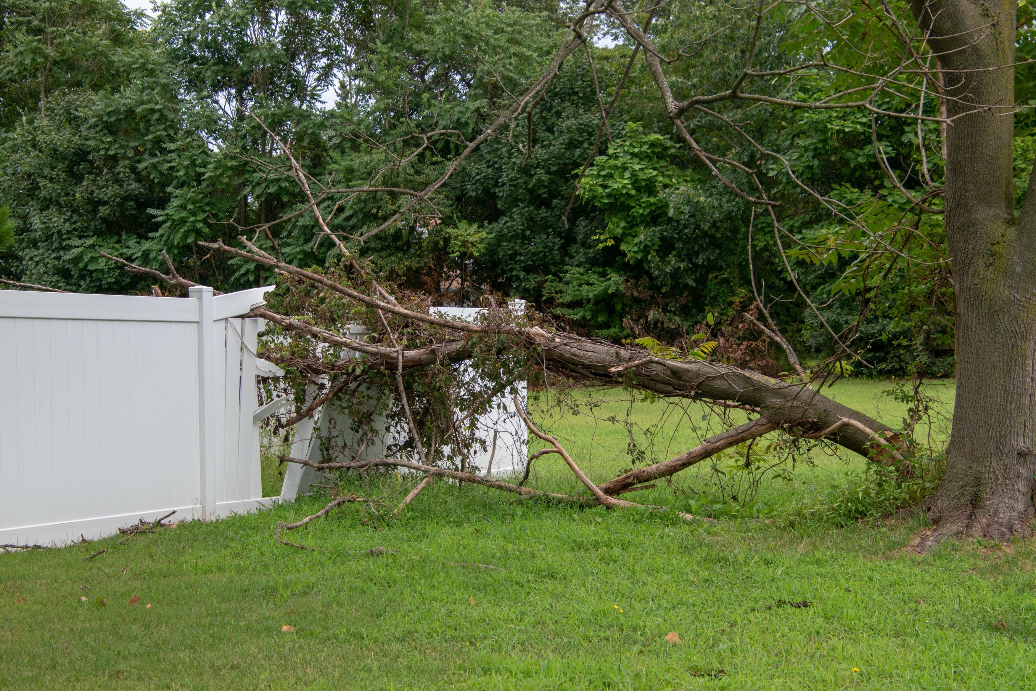 Tree Damage, Severe Weather, Storm Damage