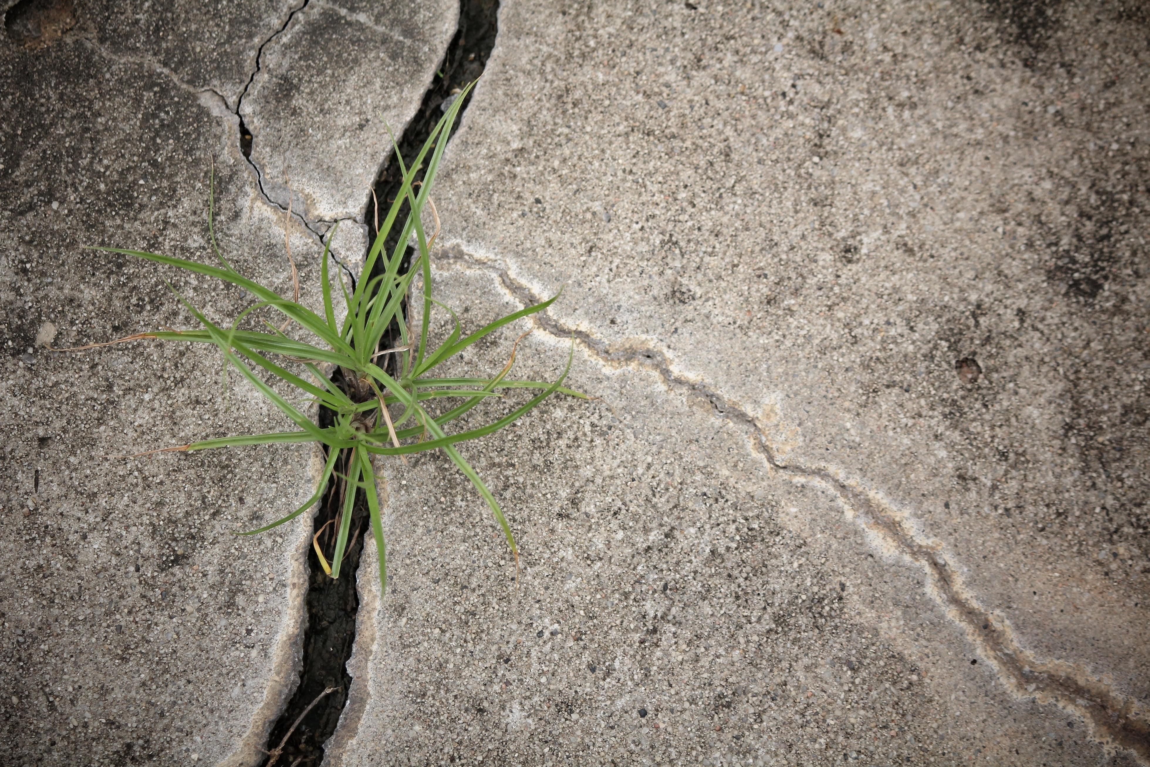 Driveway Crack, Crack, Cement Crack