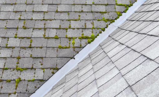 Roof, Algae Growth, Roof Shingles