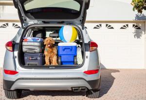 Road Trip, Packed Car, Dog, Beach Ball, Luggage
