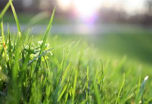 Grass, Sun, Outdoors