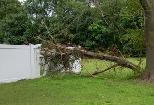 Tree Damage, Severe Weather, Storm Damage