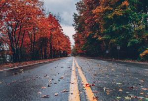 Autumn, Leaves, Empty Road, Fall