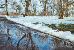 Melting Snow, Water, Trees