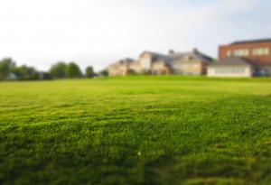 At Home, Curb Appeal, Lawn Care, Yard Work, Grass